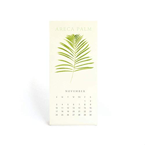 """""""The Silence Of Plants""""Art Print - 2020 Mini Desk Calendar - 3.5 x 7.8 inch - Featuring Botanical Painting in Watercolor Mother's Day Gift"""