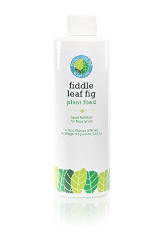 Fiddle Leaf Fig Plant Food: Fiddle Leaf Fig Tree Fertilizer from The Fiddle Leaf Fig Resource. Care for Your Fiddle Leaf Fig Tree with Year Supply of Live Indoor House Plant Nutrients 8 Liquid Ounces