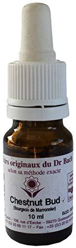 Elixir floral n 7 - chestnut bud