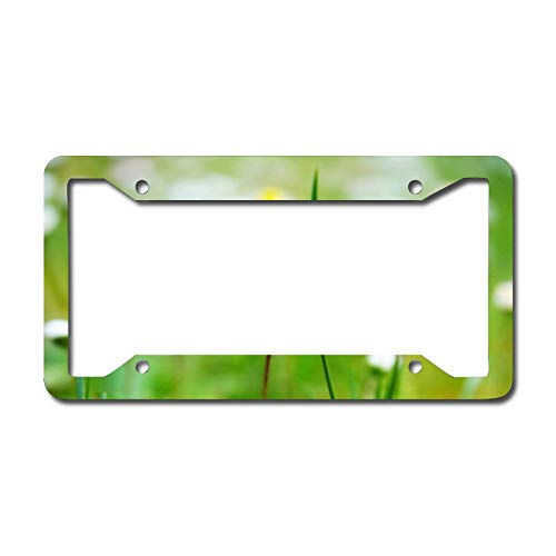 Lilac White Daisy License Plate Frame, Decorative Car Front, Metal Car Plate, License Plate, Vanity Tag, Aluminum Noverlty License Plate for Men/Women/Boy/Girls Car 6.3 X 12.2 Inch