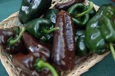 GEOPONICS Ancho Poblano Chile Pepper Samen, Chili, NON-GMO, Variety Größen, (2000)