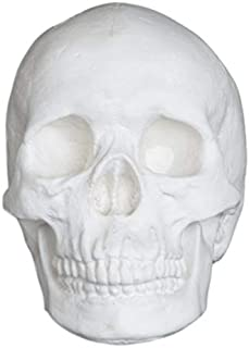 Plaster Cast Skull, Human Skull, for Life Drawing and Painting, Life Size, White