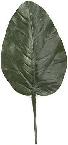 8.5 Inch Extra Large Banyan Ranking TOP4 Ranking TOP3 Outdoor Leaf