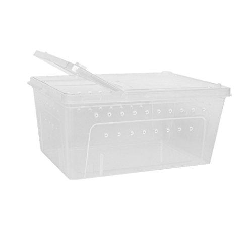 Fenteer Caja De Plástico Transparente Insecto Reptil Transporte Crianza Caja De Alimentación...