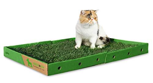 GreenInBox Super Cat - 60 x 80 cm Cuccia per Gatti in Vera Erba