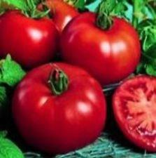 Erbstück SIBIRISCHES TOMATE Frühe OP 50 Samen Set Frucht bei 38 ° F (3,33 ° C)
