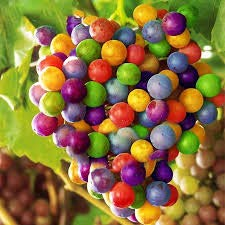 Grape Seeds Rainbow Colorful Garden Fruit Plants...