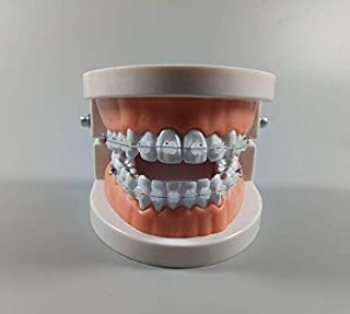 1 Piece Orthodontic Study Model Brace Demonstrate Sample Clear Bracket Wires Teach Student