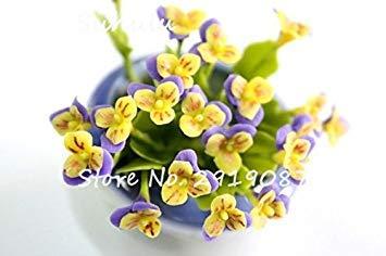 Fash Lady 200 stücke seltene mini Stiefmütterchen samen Gewellte Viola Tricolor Mehrjährige Blumensamen Helle Schöne folwer mini bonsai für hausgarten plan 11