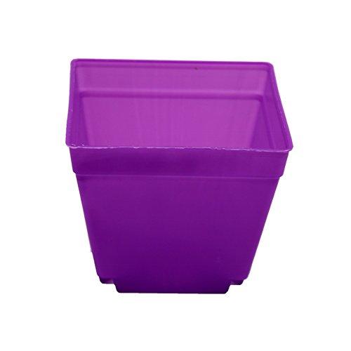 Adhere To Fly Lot de 10 pots de fleurs carrés en plastique pour intérieur Violet 10 cm