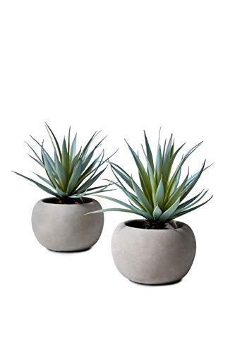 Serene Spaces Living Sword Grass in Grey Cement Pot, Set of 2, Perfect for Weddings and Home Décor, Real Looking Succulent for Decoration, Measures 6in Diameter x 8in High