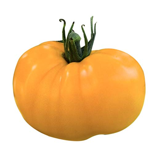 Organic Yellow Azoychka Tomato Seeds - Heirloom...