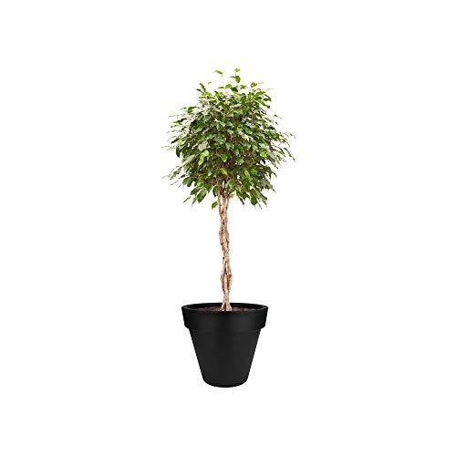 Elho Pure Round 50 - Pot De Fleurs - Noir - Intérieur & Extérieur - Ø 49 x H 44.4 cm