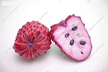11pcs / sac de sucre exotique Graine extérieur ANNONA Squamosa Fruta tête Fruit de Bouddha bio Juicy Custard 10