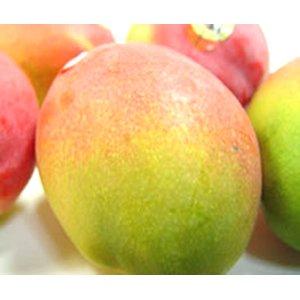 【お中元】 メキシコ産 アップルマンゴー 3個入り (1個:約350g) 【のし付】