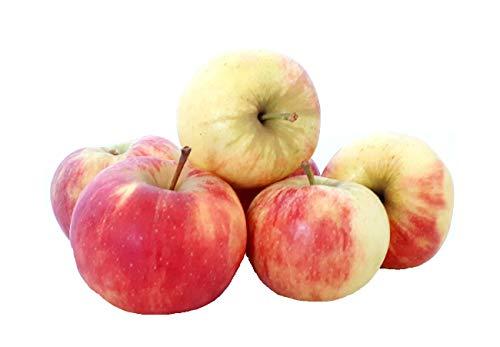 Äpfel Elstar vom Bodensee fein-säuerlicher Apfel 1-10 KG (2)