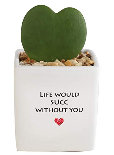 Costa Farms Live Fully Rooted Succulent Hoya Heart, Life Ceramic, White