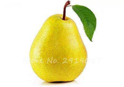 5 Pcs chinois poire Graines de sable blanc poire juteuse charnues fruits doux et délicieux vert sain nourriture savoureuse Bonne jardin des plantes 1