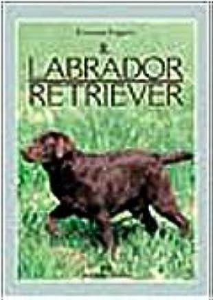 Il labrador retriever