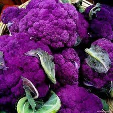 Alick 25 Broccolini Gemüsesamen Lila
