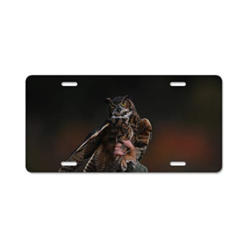 wanshangcheng Alumina Cute Owl License Plate Frame + Chrome Screw Caps
