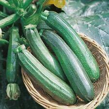 Risitar Graines - 10pcs Courgette Profusion (Grisette de Provence) productive, Graines de légumes Plantes vivaces résistante au froid