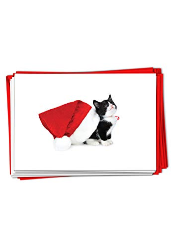 The Best Card Company - 12 Cat Christmas Greeting Cards - Cute Boxed Notecard Set, Holiday Animal Cards with Envelopes (1 Design, 12 Cards) - Santa Cats Black B6687FXSG