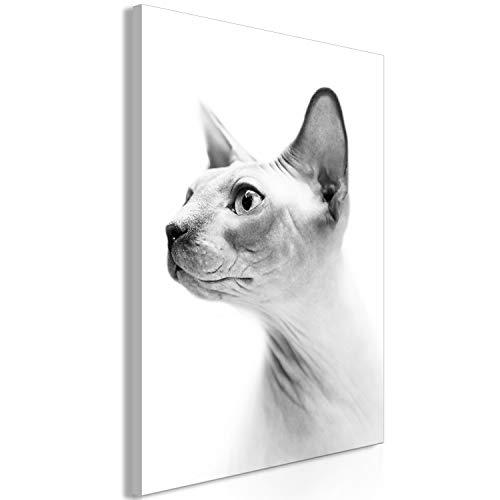 murando Cuadro en Lienzo Gato Esfinge 80x120 cm 1 Parte Impresión en Material Tejido no Tejido Impresión Artística Imagen Gráfica Decoracion de Pared - Animal Gris Blanco Negro g-B-0111-b-a
