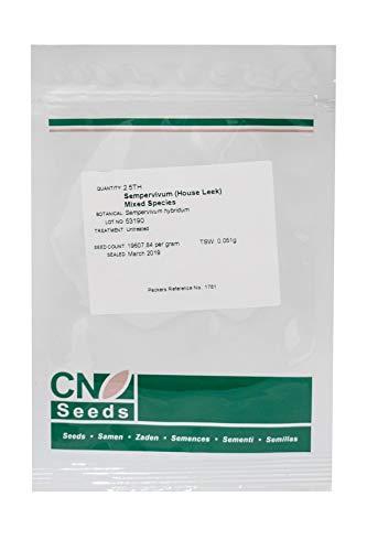Sempervivum, House Leek Mix, confezione da 2,5