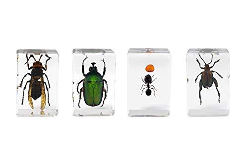 Celestron – Kit de especímenes de insectos 3D #5 – Observar insectos – Accesorio ideal para cualquier microscopio digital Celestron