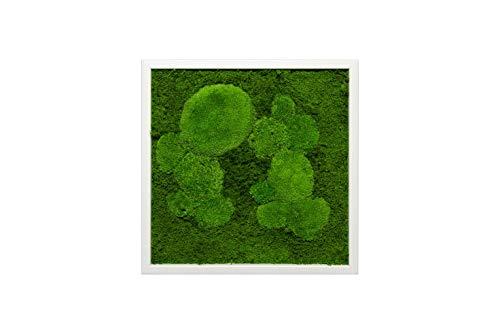 Moosbild Wandbild mit Moos Kugelmoos Moosplatte Pflanzenbilder Moosbilder versch. Maße günstig (35x35 cm, weiß)