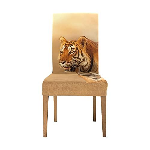 Haustier Schonbezüge für Stuhl Great Tiger Male Nature Habitat Tiger Chair Cover Protector Weiche Stretch-Sitzbezüge Esszimmerstühle Waschbar Abnehmbare Stretch-Stuhlbezüge Für Esszimmer Home Party H