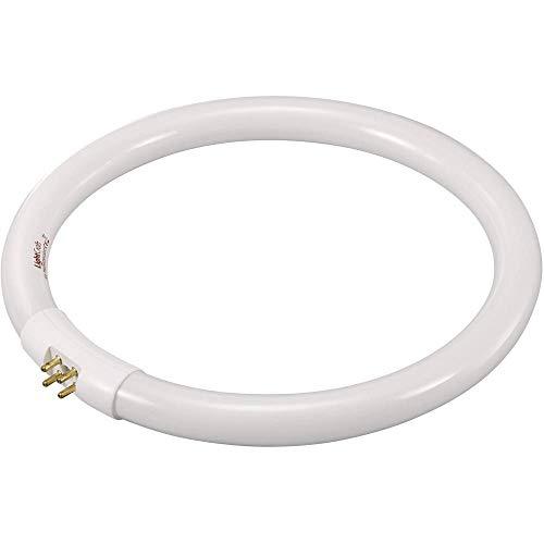 Leuchtstoffröhre EEK: B (A++ - E) TOOLCRAFT 821665 G10q Leistung: 22 W Tageslicht-Weiß