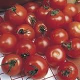Semenza pomodoro ciliegino (Solanum lycopersicum), 40 semi