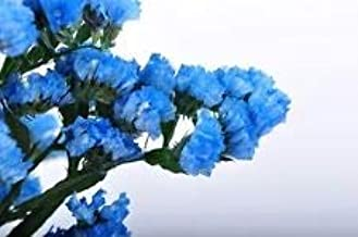 50+ Heavenly Blue Statice Flower Seeds/Long Lasting Annual/Great Gift