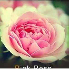 les colis noirs lcn Lot de 20 Graine Rose Rosier Rose