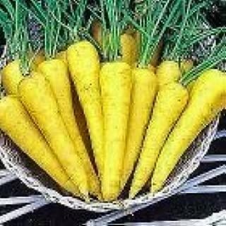 Best yellow sun carrot Reviews