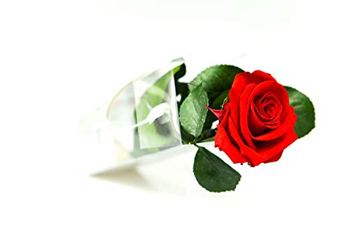 Rosen-Te-Amo – Konservierte echte rote Rose: Unvergängliche Blume mit Grußkarte zum Herunterladen; Infinity Rosen - Deko und Geschenk in neue verstärkte Verpackung