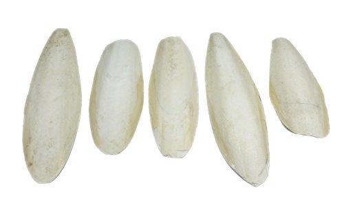 Britten & James Confezione da 5 grandi seppie naturali, da 5,5 a 8 pollici, 13-20 cm. Per parrocchetti, pappagallini e canarini, tartarughe, tartarughe, lumache e tartarughe.