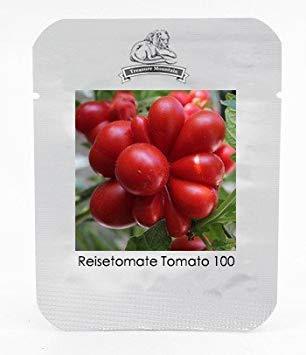 SANHOC Samen-Paket: HOO Produkte - Ungewöhnliche und seltene Erbstück Reisetomate Tomate Lycopersicon lycopersicum Samen, Profi-Pack, Samen Loss Förderung!