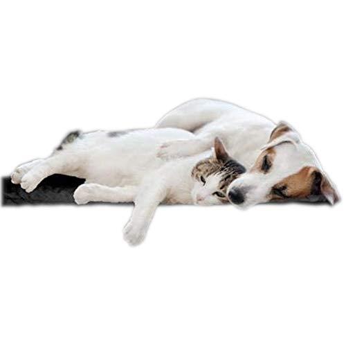 biomagnet24®, 80cm x 60cm Magnetfeldmatte, Magnetfelddecke, Magnetfeldtherapie für Tiere, zur Behandlung bei Arthrose, Spondylose, Hüftgelenksdysplasie, Ellenbogendysplasie beim Hund und Katze