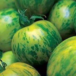 Tomato Green Zebra Great Garden Heirloom Vegetable By Seed Kingdom BULK 1,000 Seeds