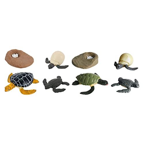 Cabilock 2 Juegos/ 8 Piezas de Estatuilla de Ciclo de Vida Tortuga Animal Salvaje Figuras de Ciclo de Vida Tortuga Modelo de Ciclo de Crecimiento para Niños Decoración del Hogar