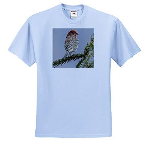 3dRose Danita Delimont - Birds - Male House Finch in Winter. - Youth Light-Blue-T-Shirt Small(6-8) (ts_345310_60)