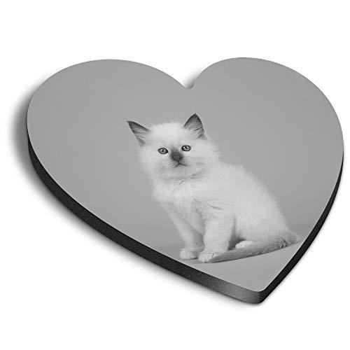 Destination Vinyl ltd Corazones MDF Imanes – BW – Blanco Bebé Ragdoll Gatito Gato para Oficina, Armario y Pizarra Blanca, Pegatinas Magnéticas 42516