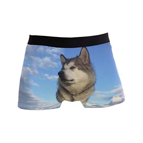 Herren Boxershorts Animal Alaskan Malamute Hund Unterwäsche für Jungen Jugend Herren Polyester Spandex atmungsaktiv Gr. L, Mehrfarbig
