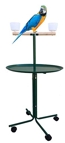Large 47″ Metal Base Parrot Bird Cage amaozn shap2 African Grey Macaw Cockatoo Play Metal Stand (Green), Gym exercise ab workouts - shap2.com