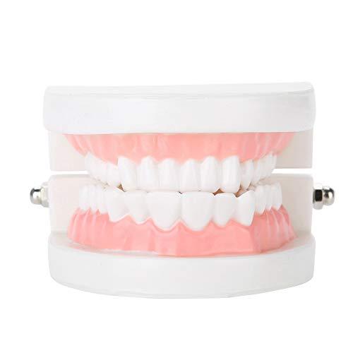 Modelo de atención dental, modelo de dentadura dental 28 piezas Modelo de dientes adultos estándar Herramienta de enseñanza médica para niños, estudiantes de odontología, paciente, enseñanza,