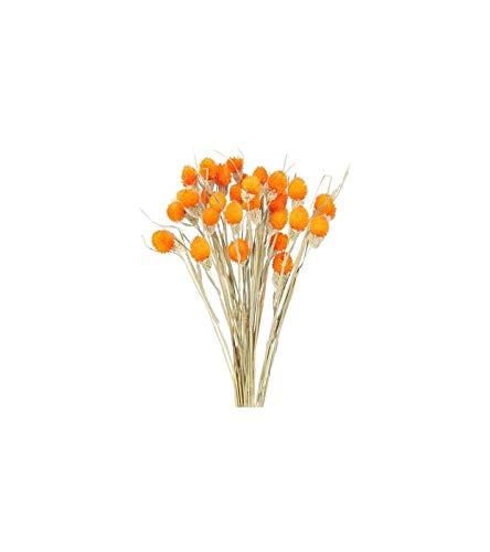 Luckylele Flores secas ramo de flores secas naturales secas flor natural artificial artificial flores hechas a mano flores falsas para bricolaje jarrón casero boda fiesta fotografía punta decoración D