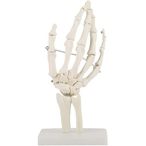 TKer Hand Skelett Modell- Medizinische Anatomie des medizinischen Handskeletts Lebensgröße Skelettmodell der menschlichen Handgelenkstudie